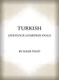 Turkish Livestock Guardian Dogs Article