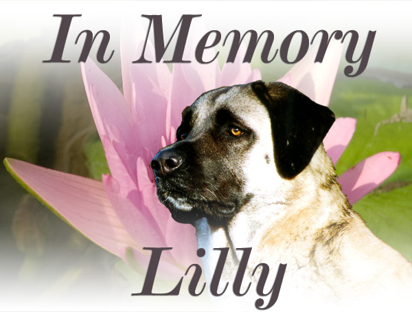 In memory Lilly
